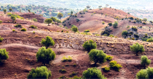 moroccan-desert